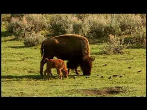 American Prairie Reserve Profiled by National Geographic