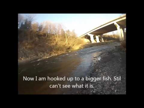 Credit River fishing 30 Apr 2016 - Full day in under 10 minutes