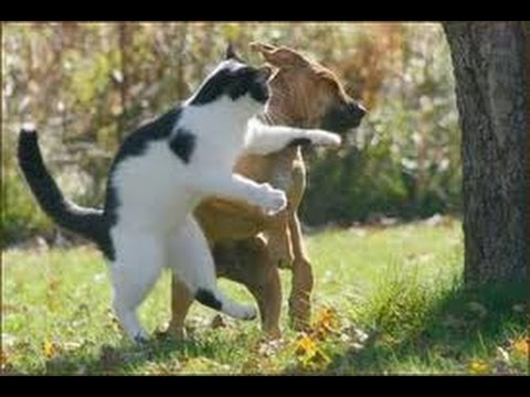 Funny Videos - Funny Cats - Funny Animals - Funny Dogs - Funny Compilation 2015
