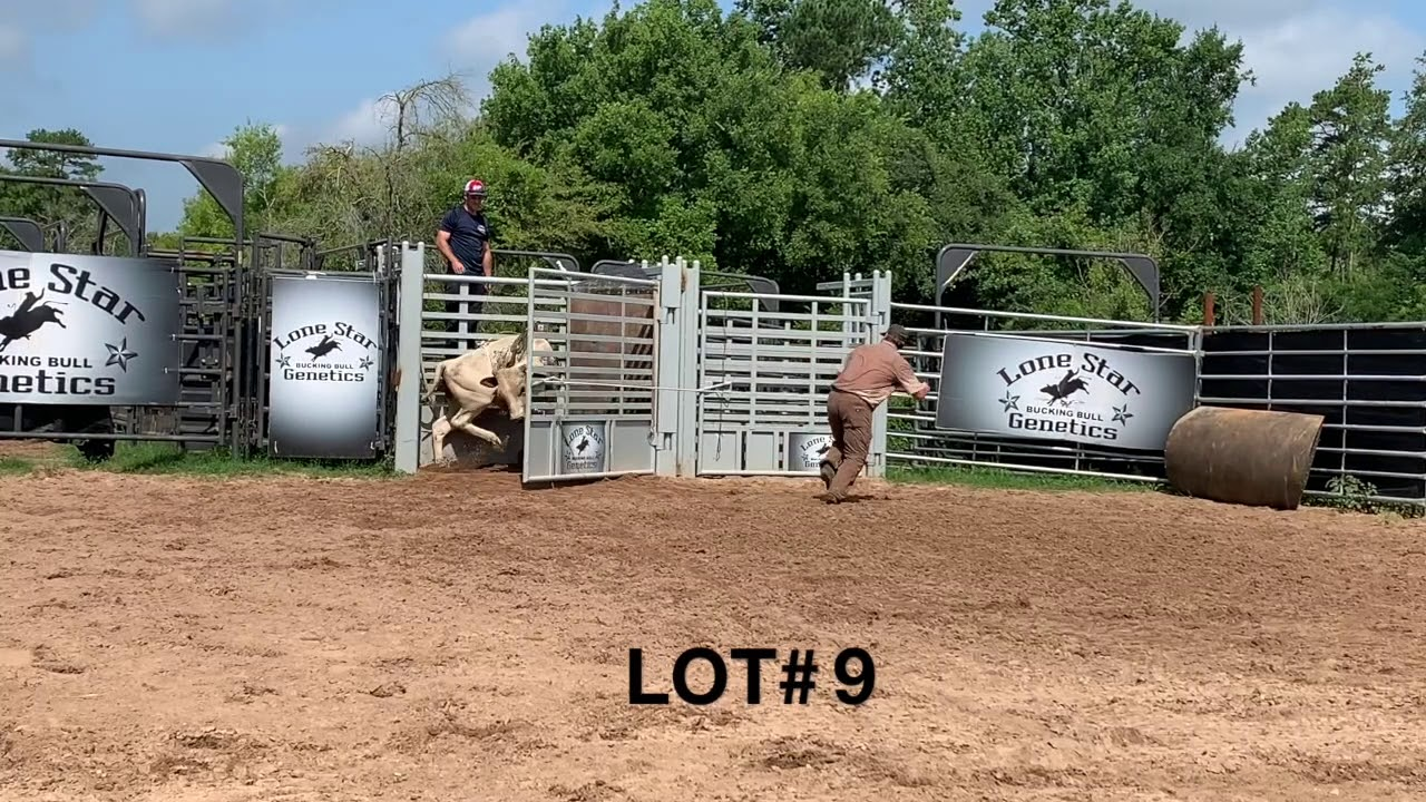 Download Cheyenne Yearling Bull Sale
