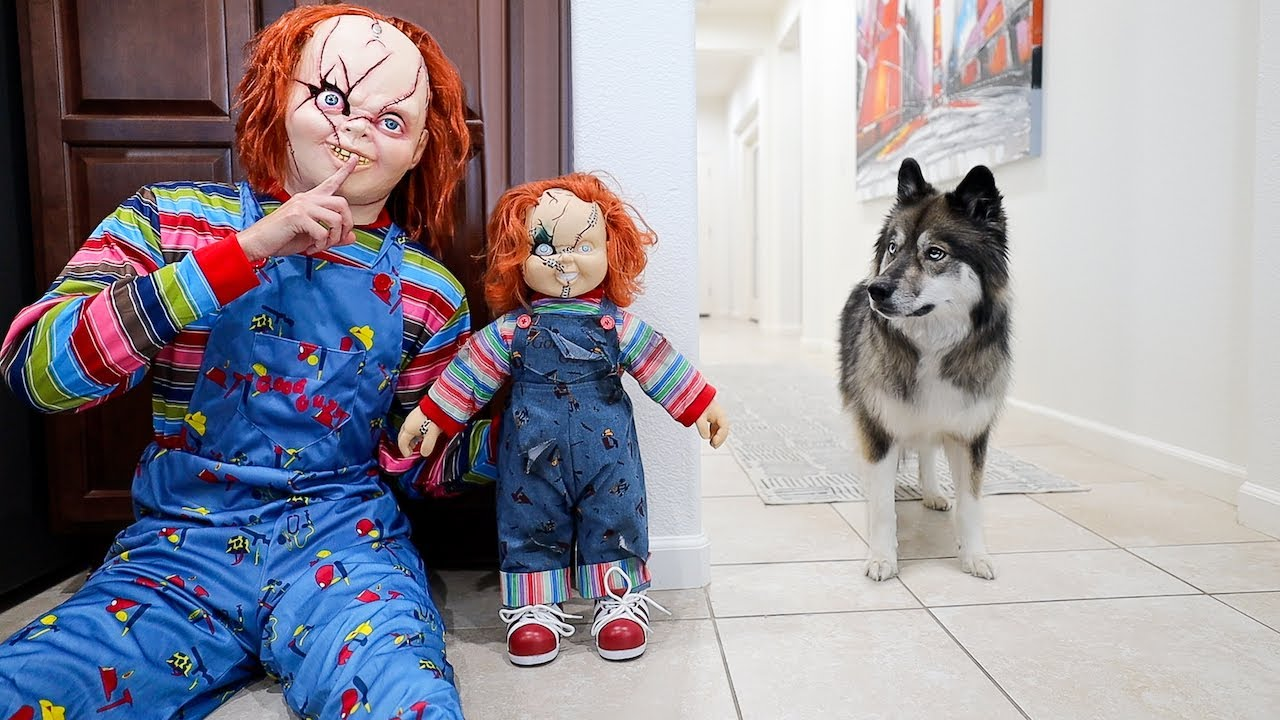 Funny Dog Gets Pranked By Chucky & Halloween Costumes!