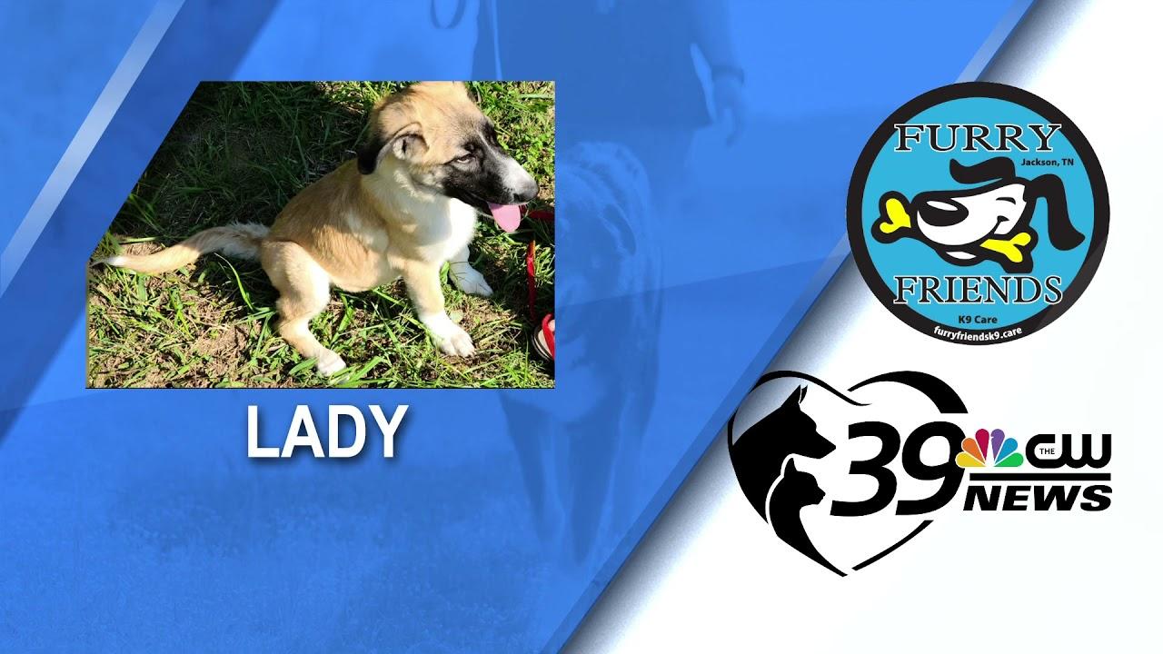 Pet Spotlight: Meet Lady