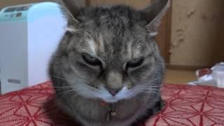 ネコねこ猫ふぅにゃー.