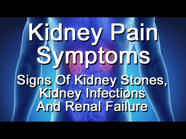 Kidney Pain Symptoms Signs Of Kidney Stones Kidney Infection Renal Failure Youtube