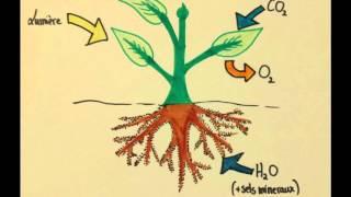 SVT - Vie Fixée et Nutrition des Plantes