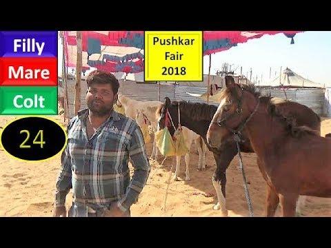 पुष्कर मेला Pushkar Fair Mela Horse Market 2018 : Indian Mare Colt Filly : Ghoda Bazar - YouTube