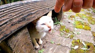 ベンチの下にいた野良猫、一旦は逃げたけど少し甘えてくるようになった