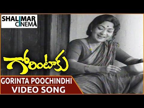 Gorintaku Movie || Gorinta Poochindhi Video Song || Shobhan Babu, Sujatha || Shalimarcinema