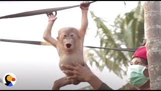 Wild Animals Rescued by INSPIRING Heroes | The Dodo Showcase