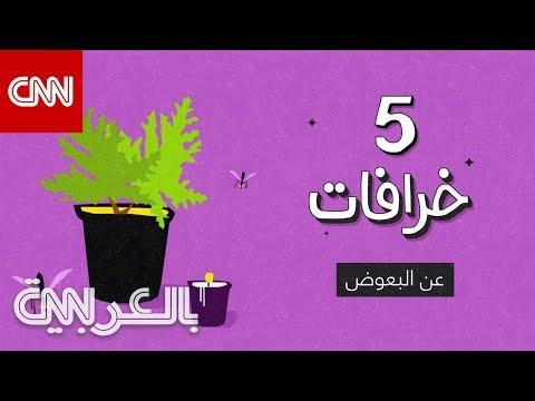 5 خرافات عن البعوض  - نشر قبل 6 ساعة