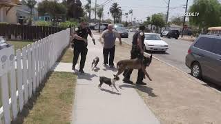 National City: K9 Officer Attacked During Suspect Search