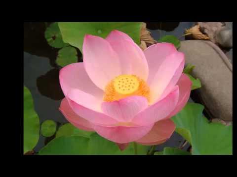 Những Mẫu Chuyện Về Nhân Quả.mp4 - Phật Pháp Vô Biên