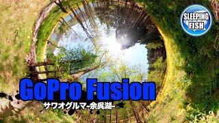 GoPro Fusion サワオグルマ-余呉湖-