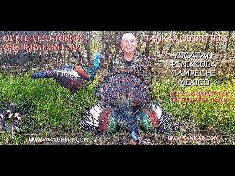 Ocellated Turkey hunt Bow & arrow on Yukatan Peninsula in Mexico Archery