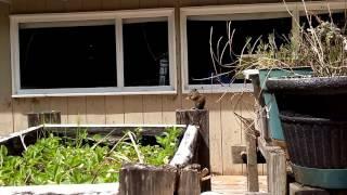 США.  Видео для тех, кто любит природу :)))бурундук в обьективе