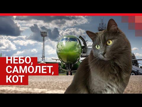 Видео Ярославль:  сбежавший из самолета кот нашелся спустя полгода