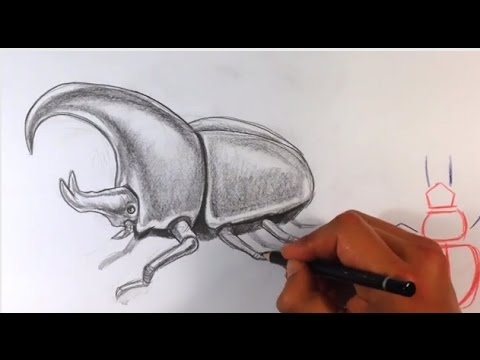 how to draw a beetle easy things to draw youtube