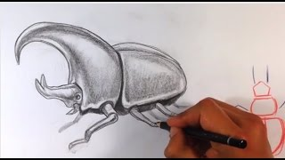 How to Draw a Beetle - Easy Things to Draw