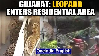 Leopard enters residential area in Gujarat's Dahod, creates panic: watch | Oneindia News