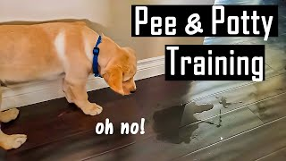 How to Pee and Potty Train your Puppy at Home | How I Did it (You will Thank Me for This)