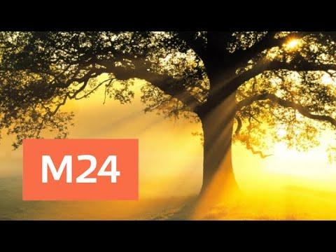 """""""Раскрывая мистические тайны"""": """"магия деревьев"""" - Москва 24"""