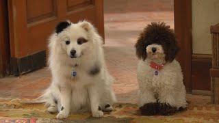 Dog With A Blog - Freddy & Gracie