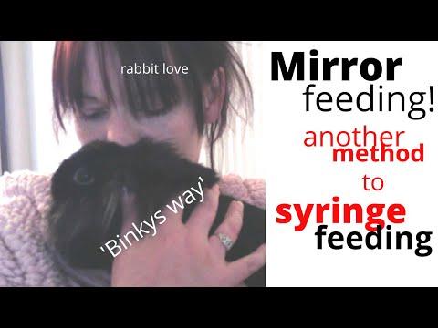 How To Syringe Feed A Rabbit With  'MIRROR FEEDING' / 'binkys Way'