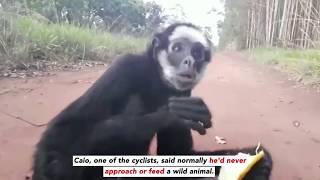 Spider Monkey Rescued