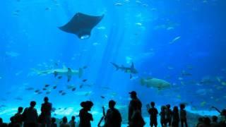 The World's Largest Aquarium // Georgia Aquarium // Atlanta GA