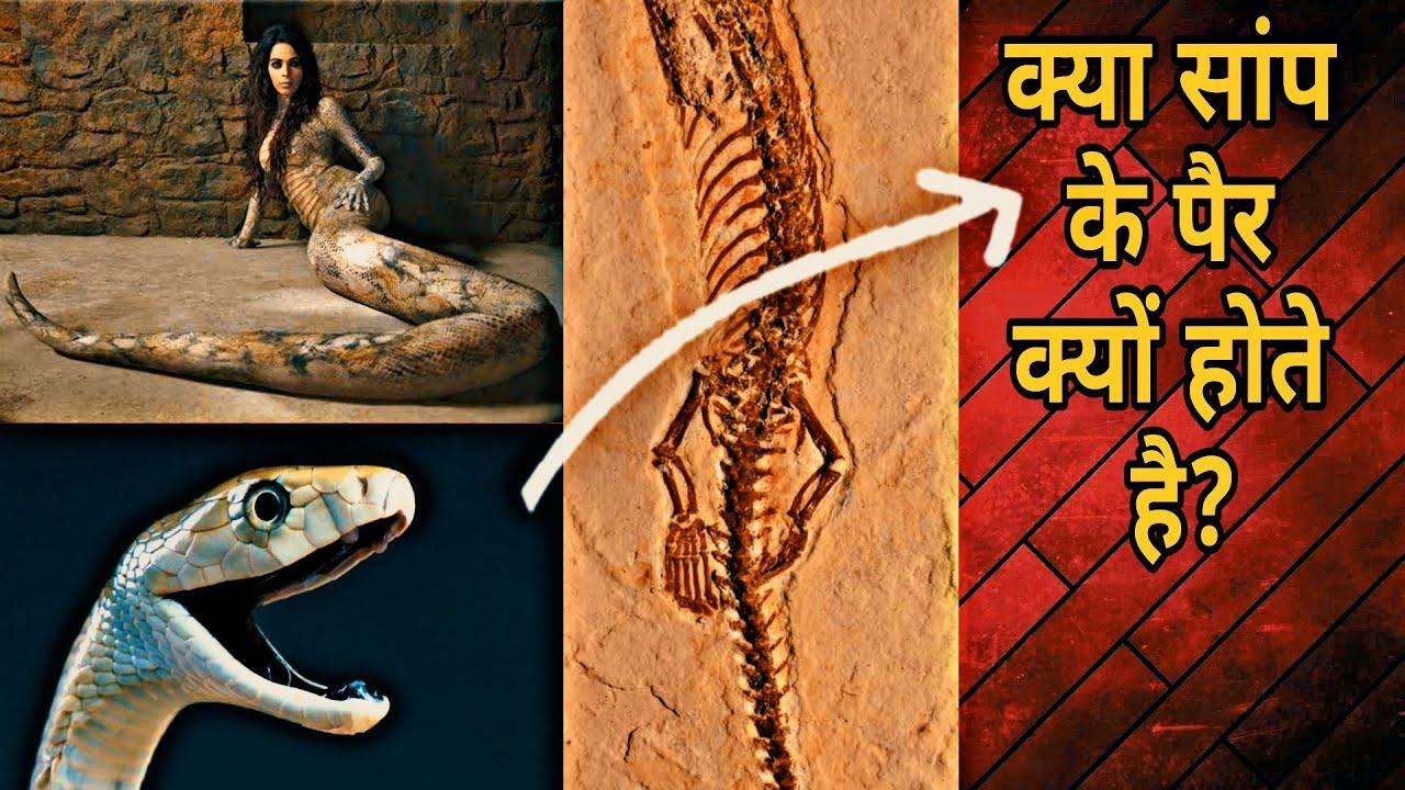 सांप के पैर क्यों नहीं होते? ! Why snake Don't have Legs ? ! Amazing Snake Facts