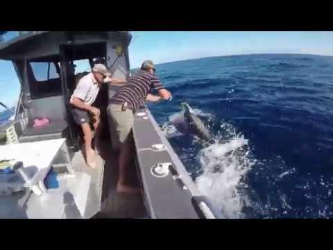 Waihau Bay Game Fishing Nationals 2020