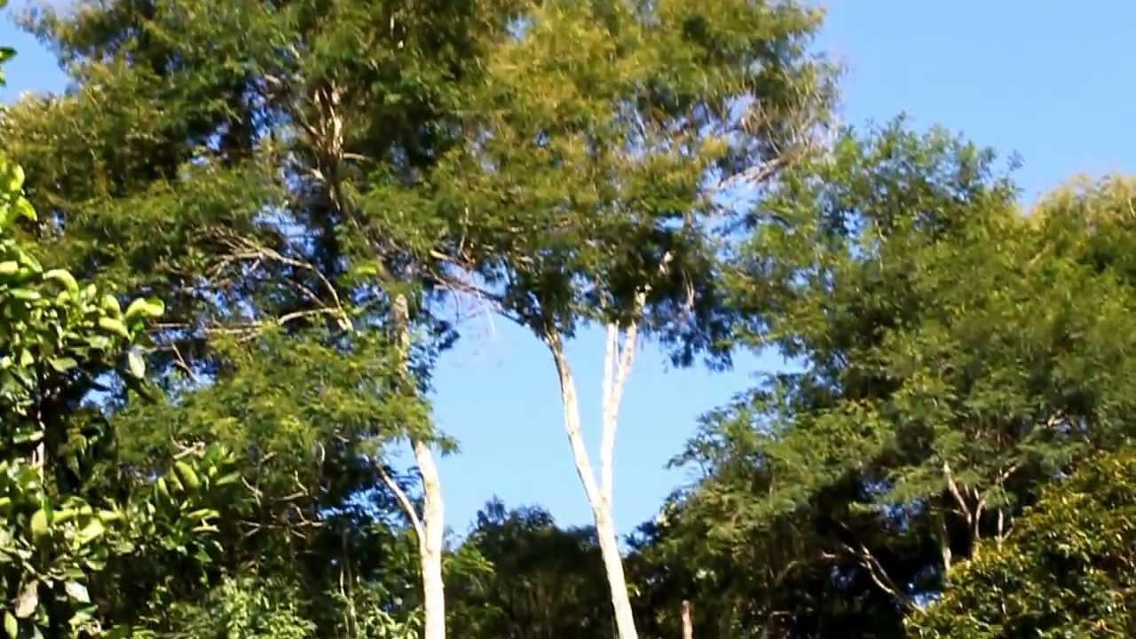 DELTA LOOP 40 metros Sra dos Remédios 2013