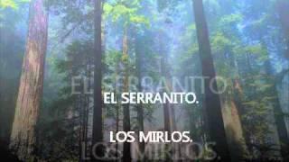 EL SERRANITO. - LOS MIRLOS.