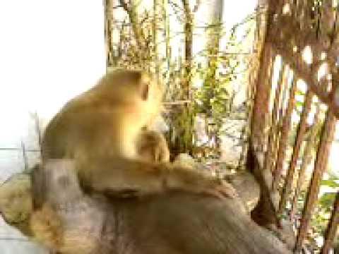 Khỉ ( Tôn Ngộ Không) 1
