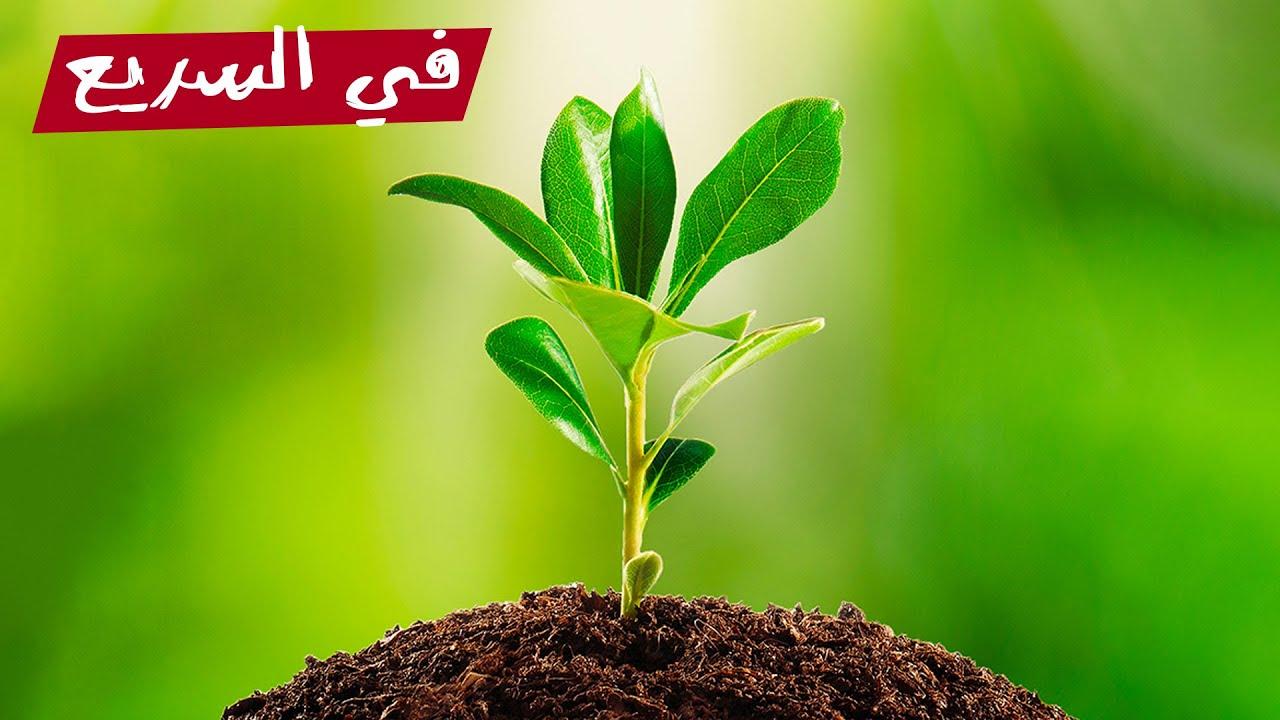 إزاي النباتات بتنمو عكس الجاذبية؟   في السريع