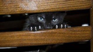 Смешное видео с кошками!Ревнивые кошки!Приколы видео!