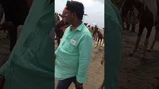 Young telugu girl horse riding