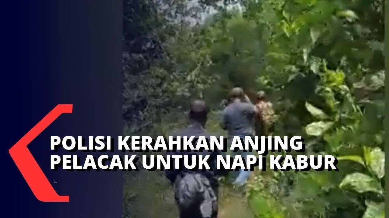 Diduga Kabur ke Hutan Tenjo, Polisi Kerahkan Anjing Pelacak untuk Cari Napi yang Kabur