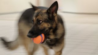 Meet Rita The K-9, Newest University Police Officer