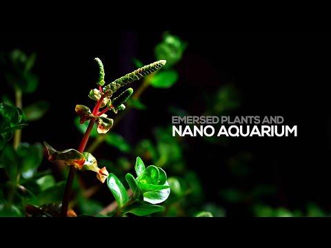 nano-aquascape-with-2-gallon-mini-aquarium