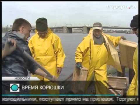 Промысел. Корюшка -- петербургский бренд, который пахнет огурцомиз YouTube · Длительность: 2 мин22 с  · Просмотры: более 1.000 · отправлено: 8-5-2013 · кем отправлено: Рыболовство ТВ