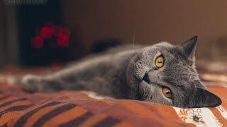 "Утро кота по имени ""Кокс"""