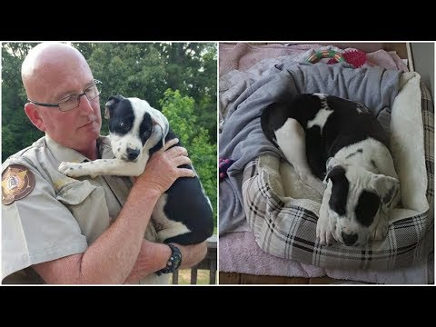 Deputy rescued a puppy from shut box and welcome her with his eight fostered dogs