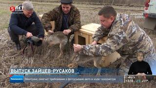 Выпуск зайцев русаков