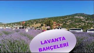 Lavanta Bahçeleri Kuyucak Köyü ISPARTA ( Sau Turizm )