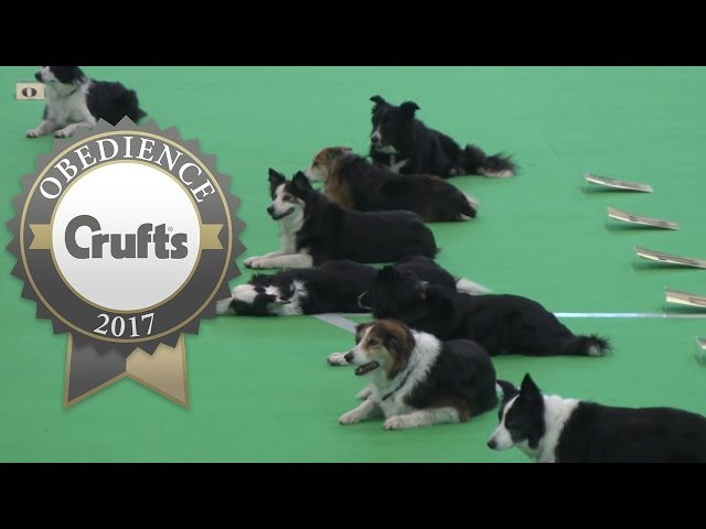 Obedience Championship - Bitches - Stays | Crufts 2017