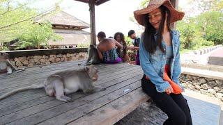 A Fat Monkey Steals My Girlfriend's Hat