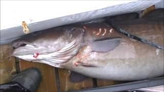 Рыбалка в Норвегии 16.03.2014,ASKØY