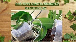 Пересадка орхидеи Фаленопсис(Пересаживаем орхидею Фаленопсис (Phalaenopsis). Когда можно пересаживать орхидею. Этот способ посадки подойдет..., 2014-11-16T22:06:49.000Z)