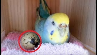 Woman Who Lets Her Bird Play With A Grocery Store Egg Gets The Surprise Of Her Life Days Later